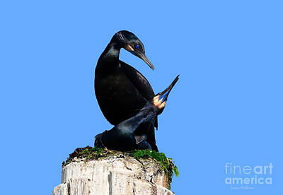 Photograph - Brandt's Cormorants In Love No. 1  by Susan Wiedmann