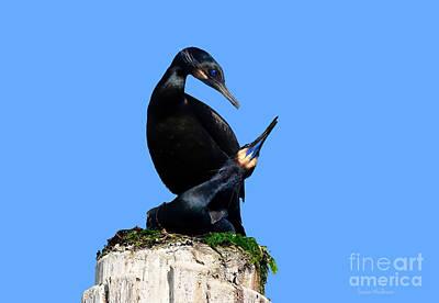 Photograph - Brandt's Cormorants In Love No. 1  by Susan Wiedmann