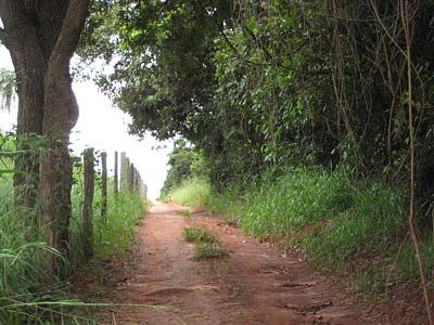 Photograph - Brasil Rural 4 by Maria Akemi  Otuyama