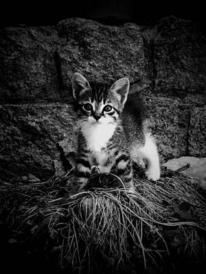 Donatella Photograph - Brave Kitten by Donatella Muggianu