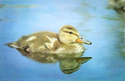 Baby Mallards Photograph - Braveheart by Fraida Gutovich