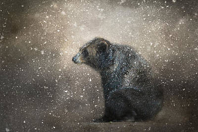 Sitting Bear Photograph - Braving The Storm by Jai Johnson