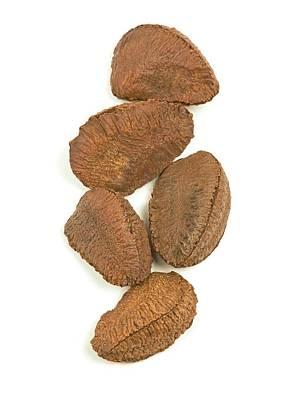 Brazil Nuts Art Print