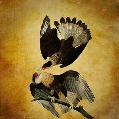 Brazilian Eagle Art Print