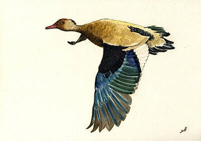 Duck Wall Art - Painting - Brazilian Teal Or Brazilian Duck Amazonetta Brasiliensis by Juan  Bosco