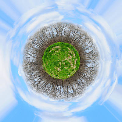 Photograph - Brazos Trees Wee Planet by Paulette B Wright
