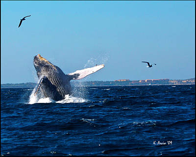Photograph - Breaching Whale by Ken Arcia