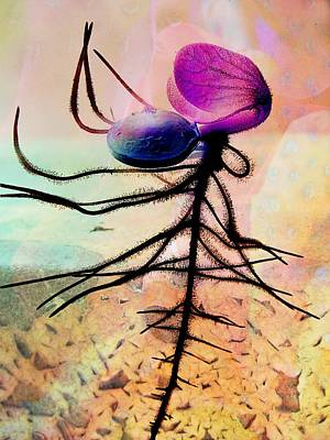 Break Forth Into Joy Art Print by Shirley Sirois