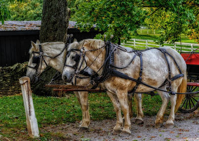 Gray Horses Photograph - Break Time On A Kentucky Farm - V2 by Frank J Benz