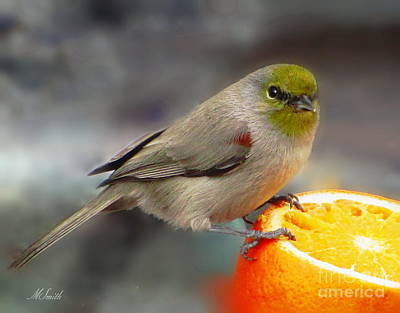 Photograph - Breakfast For A Verdin  by Marilyn Smith