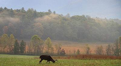 Breakfast In Cades Cove Print by Dan Sproul