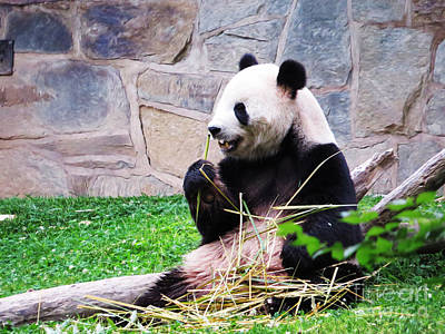 Photograph - Breakfast Of Pandas by Dawn Gari