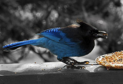 Photograph - Breakfast On The Patio by Barbara  White
