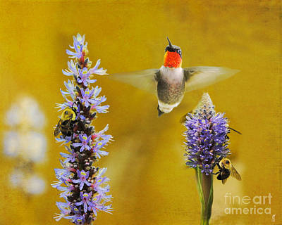 Photograph - Breakfast With The Bees by Jai Johnson
