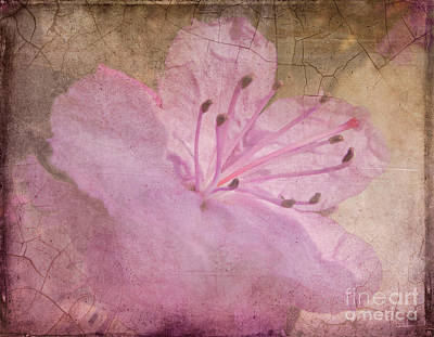 Breaking Through Art Print by Arlene Carmel