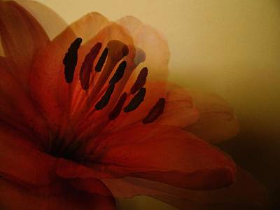 Lilies Royalty-Free and Rights-Managed Images - Breath of The Lily by Marianna Mills