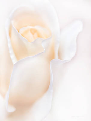Photograph - Breathless Peach Rose Flower by Jennie Marie Schell