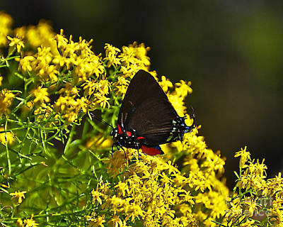 Breathtaking Butterfly Art Print by Al Powell Photography USA