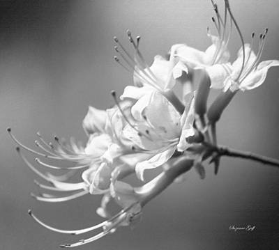 Pistil Digital Art - Breathtaking In Black And White by Suzanne Gaff