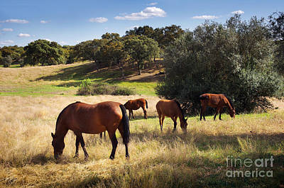 Alt Photograph - Breed Of Horses by Carlos Caetano