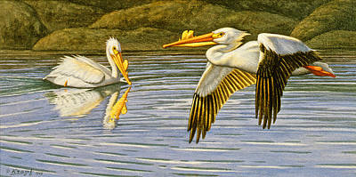Teton Painting - Breeding Season- White Pelicans by Paul Krapf