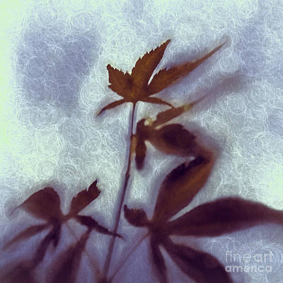 Photograph - Breeze by Jean OKeeffe Macro Abundance Art