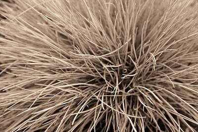 Fine Thread Photograph - Breeze Sepia by Elizabeth Sullivan