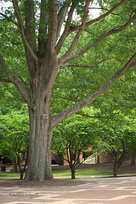 Photograph - Brickyard Tree - University Plaza - Nc State by Paulette B Wright
