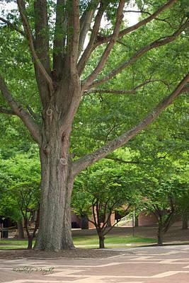 Photograph - Brickyard Tree - University Plaza - Nc State by Paulette B Wright