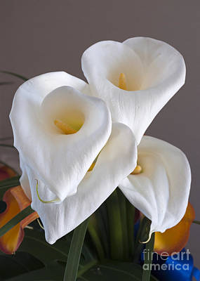 Photograph - Bridal Cali Lilies by Lula Adams