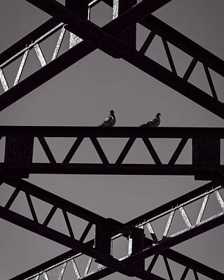 Pigeon Photograph - Bridge Abstract by Bob Orsillo