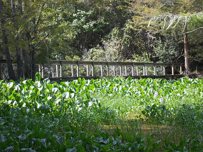Photograph - Bridge Across The Water Hyacinth by Shere Crossman