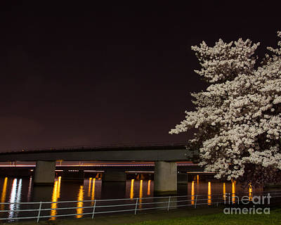 Photograph - Bridge Blossoms by Dale Nelson