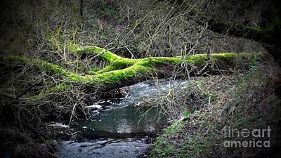Photograph - Bridge by Kenneth Clarke