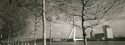 Maas Photograph - Bridge Over A River, Erasmus Bridge by Panoramic Images