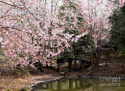 Just Desserts - Bridge over pond 2 by Wesley Farnsworth