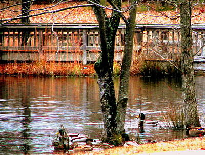 Photograph - Bridge Spanning Pond by Pamela Hyde Wilson