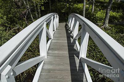 Bridge To Woods Art Print