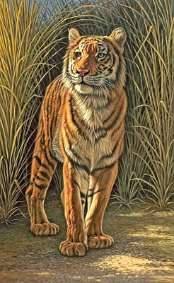 Tiger Wall Art - Painting - Brief Appearance by Paul Krapf
