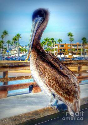 Photograph - Brief Pelican Encounter  by Susan Garren