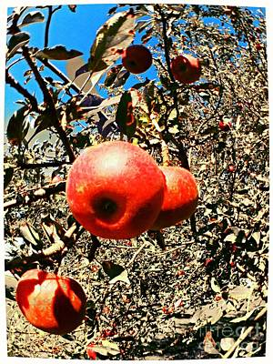 Photograph - Bright Apples by Garren Zanker
