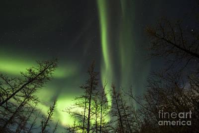Photograph - Bright Aurora Borealis, Lake Laberge by Philip Hart