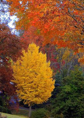 Bright Autumn Art Print by Paula Tohline Calhoun