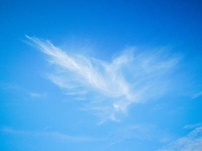 Photograph - Feather In The Sky by Roxy Hurtubise