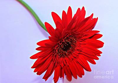 Gerbera Photograph - Bright by Clare Bevan