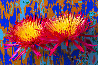 Bright Colorful Mums Print by Garry Gay
