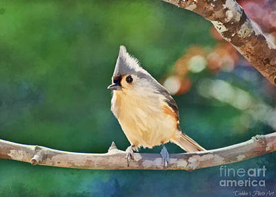 Tufted Titmouse Photograph - Bright Day Tufted Titmouse - Digital Paint 1 by Debbie Portwood