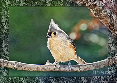 Photograph - Bright Day Tufted Titmouse 2 by Debbie Portwood