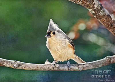 Tufted Titmouse Photograph - Bright Day Tufted Titmouse by Debbie Portwood