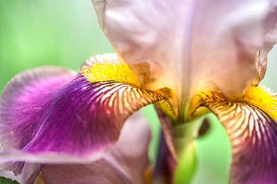 Unique Photograph - Bright Details. Macro Iris Series by Jenny Rainbow